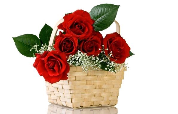 Картинка цветок, цветы, природа, корзина, розы, букет, красные, корзинка