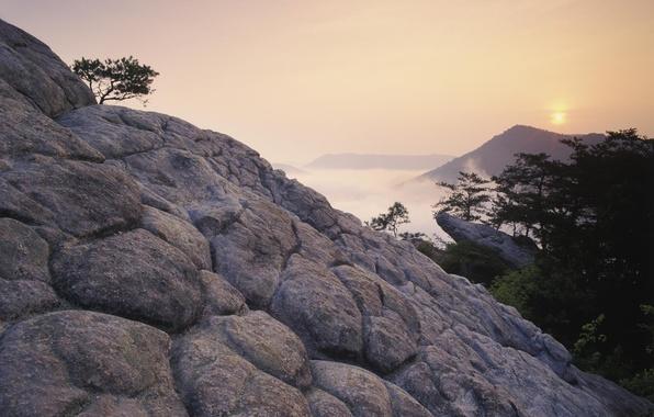 Картинка деревья, закат, горы, туман, скалы, высота