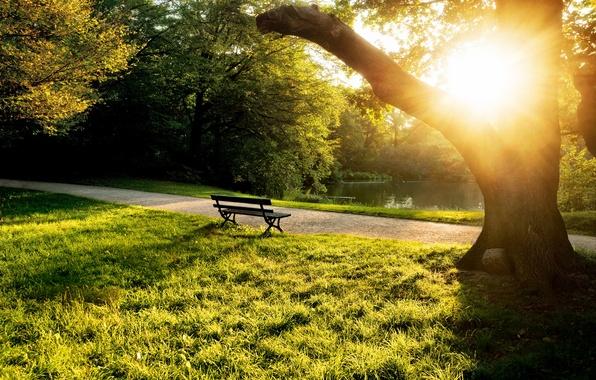 Картинка лето, трава, солнце, деревья, скамейка, пруд, дерево, вечер, лавочка, лавка, скамья