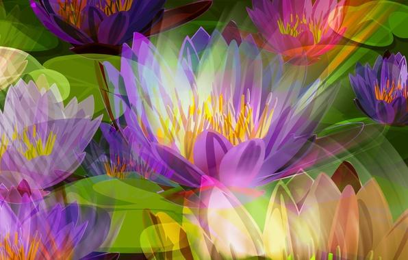 Картинка цветы, рисунок, лепестки, луг, лотос, тычинки, клумба