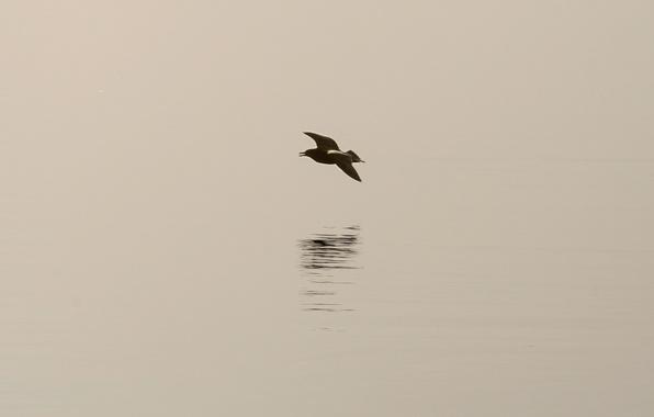 Картинка птица, тень, минимализм