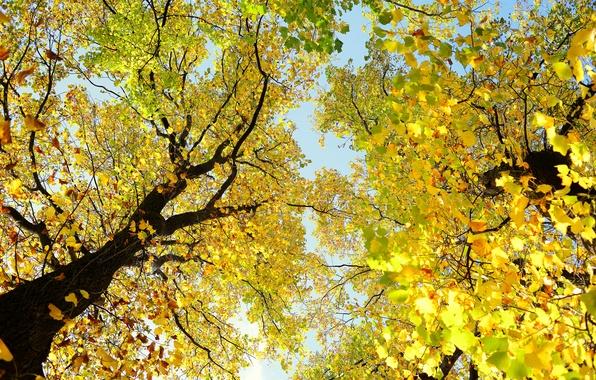 Картинка осень, небо, листья, деревья, ветки, ствол, крона