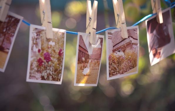 Картинка цветы, воспоминания, дом, птица, веревка, фотографии, прищепки, гусь