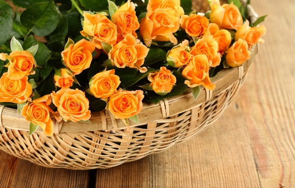 Картинка розы, лепестки, rose, flowers, petals, roses, корзины, basket