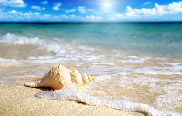 Картинка песок, море, небо, солнце, ракушка, прибой