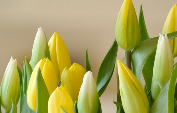 Картинка листья, букет, лепестки, бутон, тюльпаны