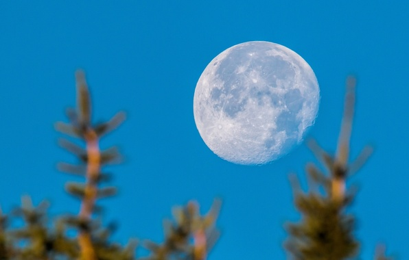 Картинка небо, деревья, планета, Луна, боке