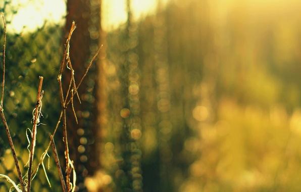 Картинка зелень, трава, макро, ветки, природа, сетка, забор, куст, размытость, боке