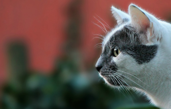 Картинка кошка, взгляд, фон, портрет, мордочка, профиль