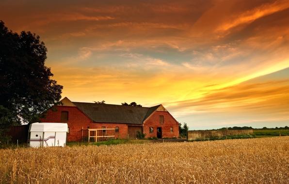 Картинка пшеница, небо, листья, солнце, облака, деревья, природа, дом, фон, дерево, обои, растение, рожь, домик, широкоформатные, …