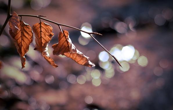 Картинка листья, макро, фон, дерево, widescreen, обои, размытие, ветка, wallpaper, листочки, листочек, широкоформатные, background, macro, tree, …