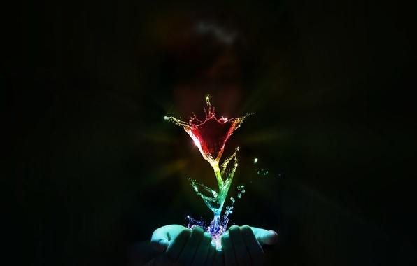 Картинка цветок, вода, руки