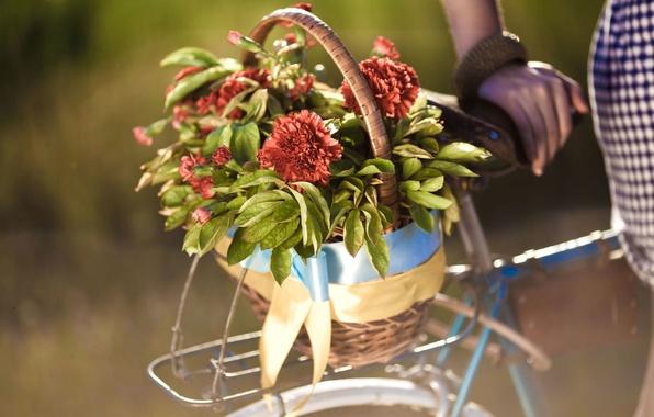 Картинка листья, девушка, цветы, велосипед, фон, widescreen, обои, корзина, рука, размытие, wallpaper, цветочки, bicycle, широкоформатные, flowers, …