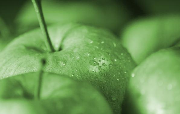 Картинка капли, макро, green, яблоки, apple, еда, зеленые, фрукт, macro, drops, apples