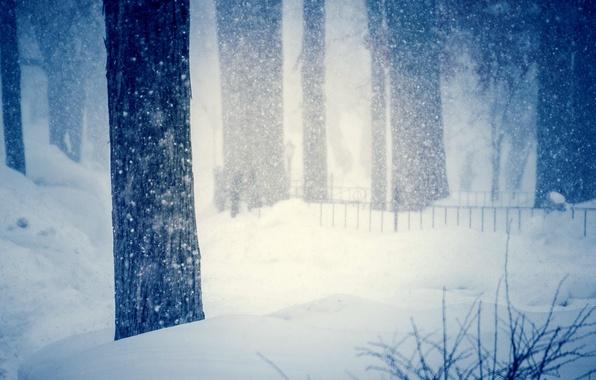 Картинка холод, зима, снег, деревья, снежинки, природа, фон, дерево, widescreen, обои, размытие, сугробы, wallpaper, trees, широкоформатные, ...