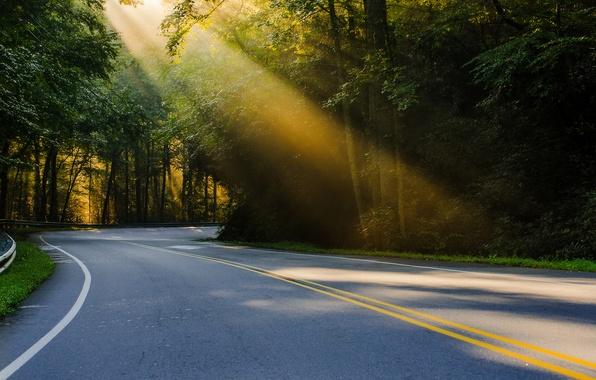 Картинка дорога, лес, лето, свет, природа, США, сонце, Северная Каролина, regularjoe Photography