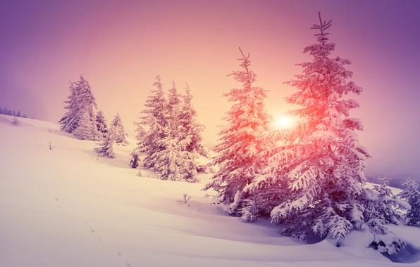 Nature winter snow for Foto per desktop inverno