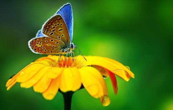 Картинка цветок, макро, природа, бабочка, капля, flower, nature, drop, butterfly, macro