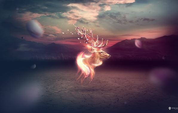 Картинка животные, свет, абстракция, животное, обои, пустыня, рисунок, олень, рога, desktopography, deer