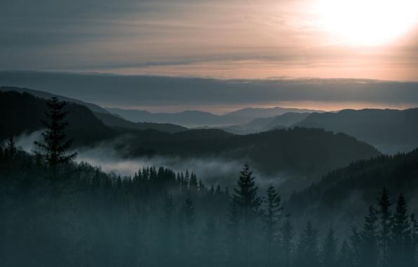 Картинка деревья, пейзаж, туман, гора, красота, Норвегия, леса