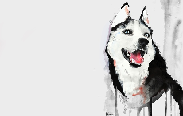 Картинка язык, рисунок, собака, акварель, хаски, хаска