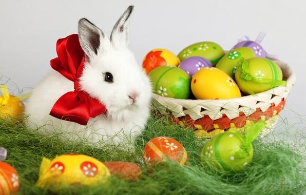 Картинка белый, праздник, корзина, яйца, весна, кролик, Пасха, бант, Easter, пасхальные