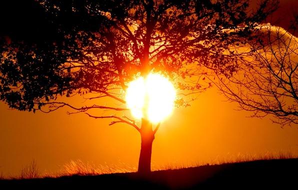 Картинка солнце, закат, дерево, тень