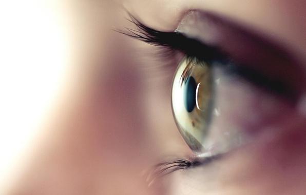 Картинка brown, macro, eye