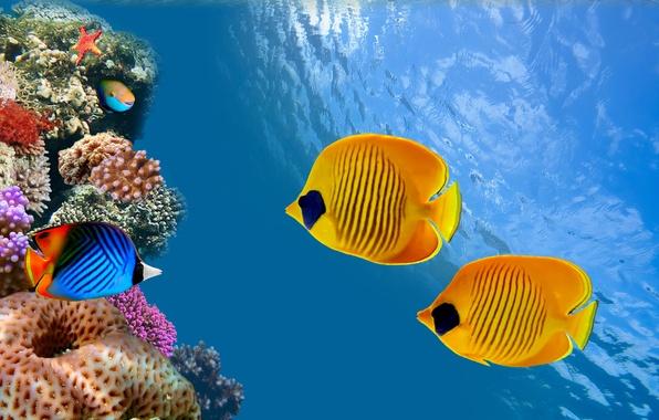 Картинка океан, рыба, Таиланд, Thailand, под водой, underwater, ocean, риф, fish, reef, колонии кораллов, coral colony, …