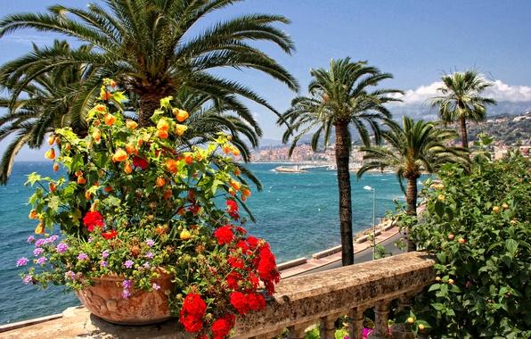 Картинки по запросу солнце пальмы и цветы фото