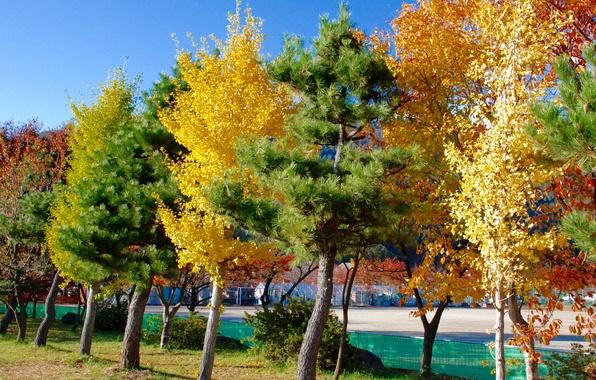Картинка осень, вода, деревья, город, дома, Япония, Токио