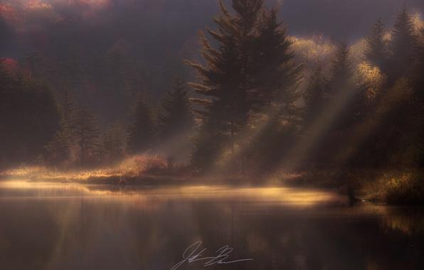 Фото обои лес, осень, природа, свет, дымка, водоем, утро