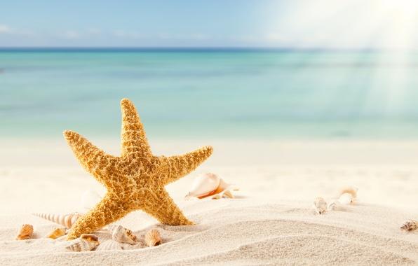 Картинка песок, море, пляж, тропики, ракушки, морская звезда, beach, sea, sand, shells, starfish, tropics