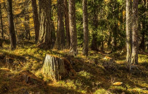 Картинка лес, трава, деревья, пень, солнечно, Исландия