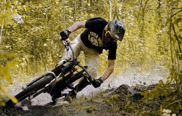 Картинка дорога, лес, велосипед