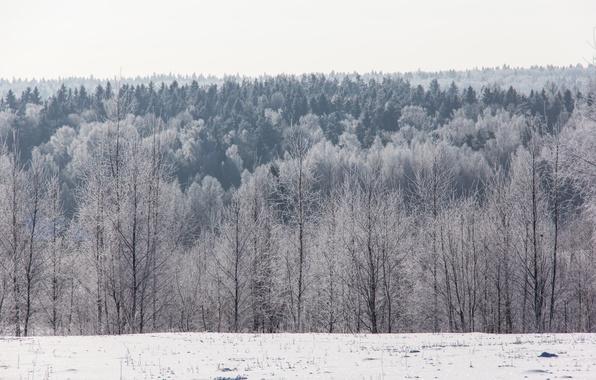 Картинка зима, иней, лес, снег, деревья, горизонт, мороз, солнечно, холодно