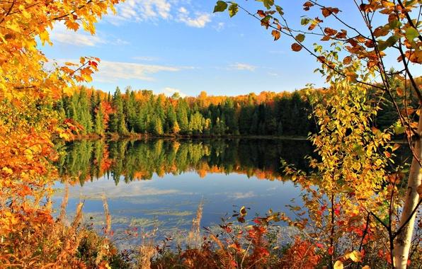 Картинки осень золотая речка мостик на рабочий стол  Осень