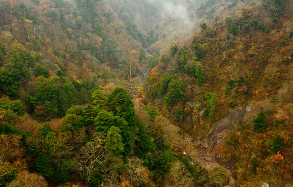 Картинка осень, лес, деревья, горы, склон