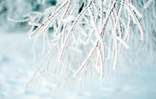 Картинка зима, иней, макро, ветки