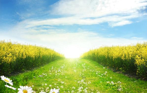 Картинка дорога, пейзаж, цветы, ромашки, одуванчики, road, landscape, flowers, dandelion, chamomile