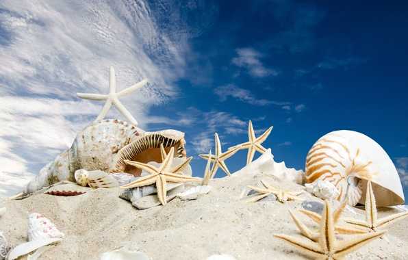 Картинка песок, море, пляж, солнце, звезды, ракушки, summer, sunshine, beach, sky, sea, sand, seashells, starfishes