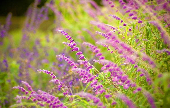 Картинка зелень, лес, лето, трава, листья, макро, цветы, свежесть, природа, парк, настроение, тишина, красота, фокус, весна, …