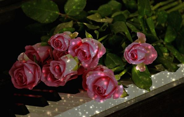 Картинка розы, клавиши, фортепиано, бутоны