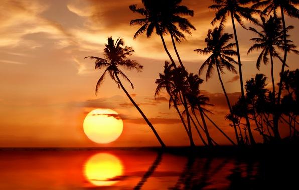 Картинка море, пляж, солнце, закат, тропики, пальмы, beach, sea, sunset, paradise, palms, tropical
