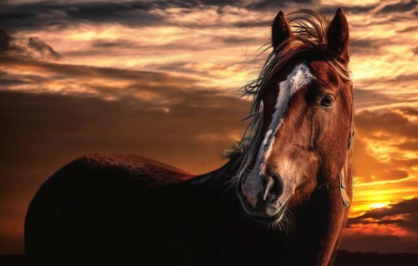Картинка небо, облака, закат, конь, обработка, Horse