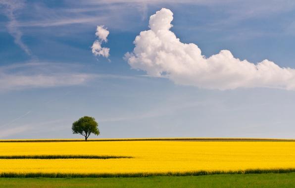 Картинка поле, лето, небо, облака, дерево, рапс