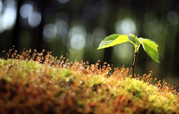 Картинка листья, капли, макро, природа, роса, росток