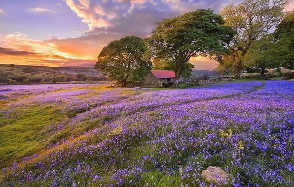 Картинка лето, облака, деревья, закат, цветы, природа, Поляна, колокольчики, строение, тропинка