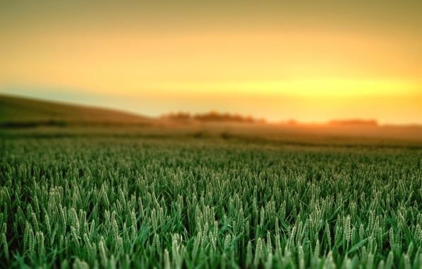 Пейзаж природа рассвет трава краски