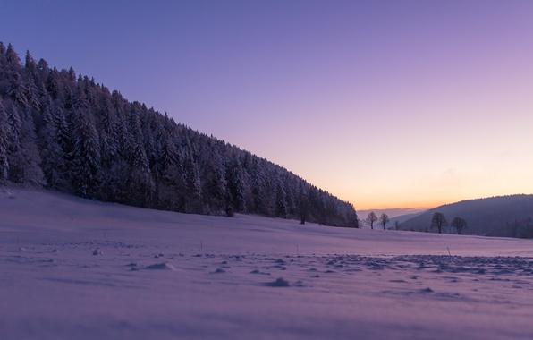 Картинка зима, лес, снег, деревья, Швейцария, Switzerland, Ла Сань, La Sagne, La Chaux-de-Fonds, Ла-Шо-де-Фон